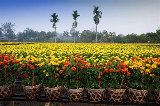 Làng nghề hoa kiểng Tân Quy Đông