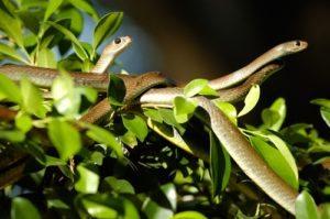 Một góc trại rắn Đồng Tâm