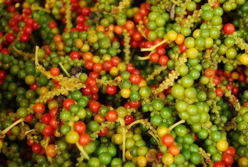 Tiêu Phú Quốc nổi tiếng thơm ngon đặc biệt hơn tiêu từ những vùng miền khác của đất nước.