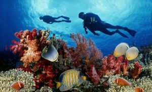 Dải san hô ở Vườn quốc gia Phú Quốc