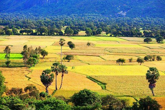 Cánh đồng Tà Pạ nhìn từ núi Cấm