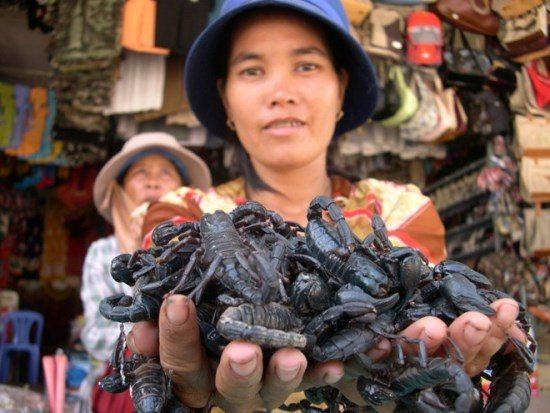 Bò cạp ở chợ côn trùng Tịnh Biên