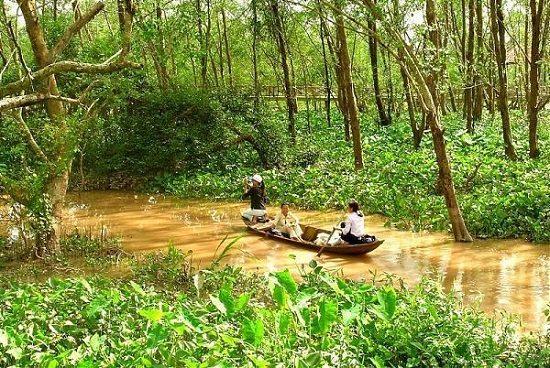 Chèo thuyền trong rừng bần ở cồn Ấu