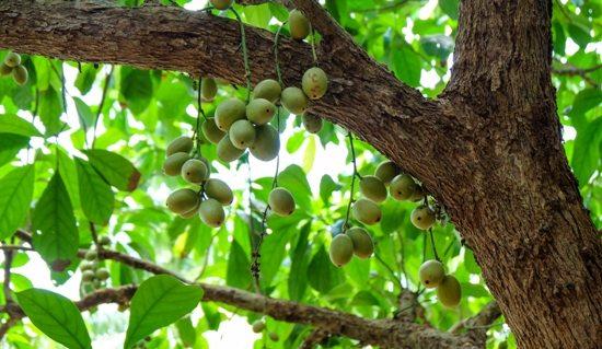 Vườn trái cây ở Mỹ Khánh
