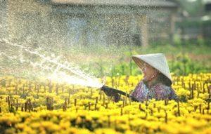 Làng hoa Tân Quy Đông