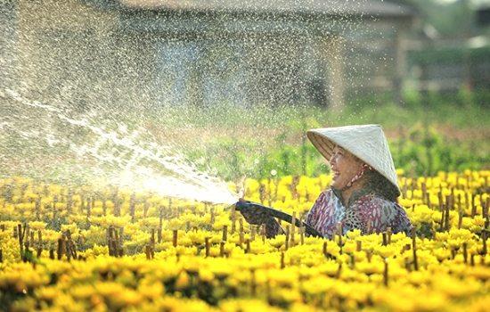 Làng hoa Sa Đéc (Làng hoa Tân Quy Đông)