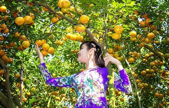 Vườn trái cây trĩu quả ở miền Tây