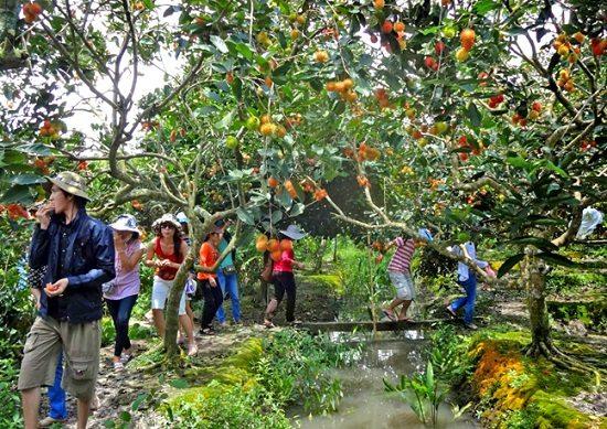 Vườn trái cây Ba Cống (Cần Thơ)