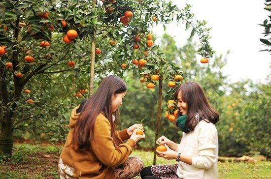 Vườn trái cây Cái Mơn (Bến Tre)