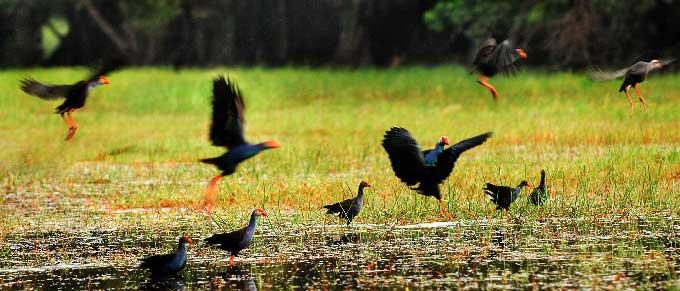 Du lịch miền Tây mùa nước nổi: Tràm Chim