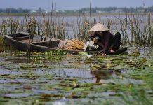 Tour du lịch mùa nước nổi miền Tây Vàm Nao Tràm Trà Sư 2 ngày