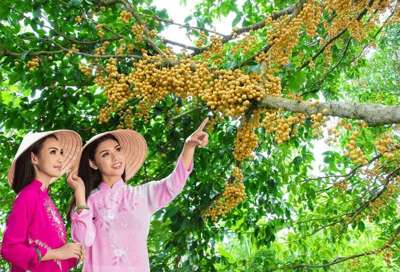 Vườn dâu Hạ Châu ở Cần Thơ