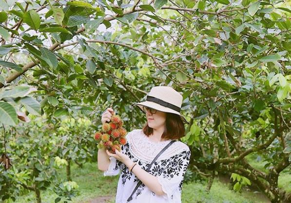 Du khách được hái trái cây ăn ngay tại chỗ