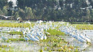 Du lịch mùa nước nổi ở Láng Sen - Long An