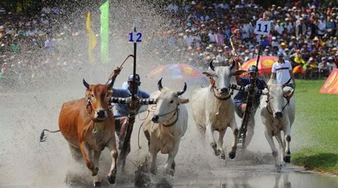 Một hình ảnh đẹp trong Lễ hội đua bò Bảy Núi An Giang
