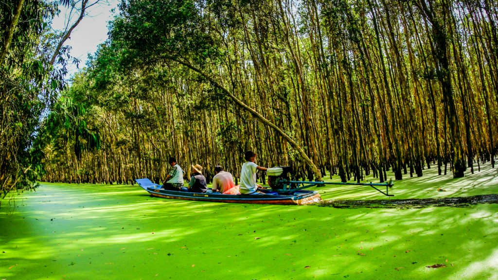 Tham quan rừng Tràm Trà Sư ở An Giang