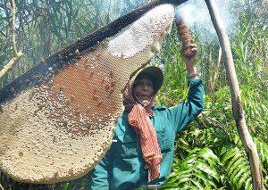 Gác kèo ăn ong ở Cà Mau