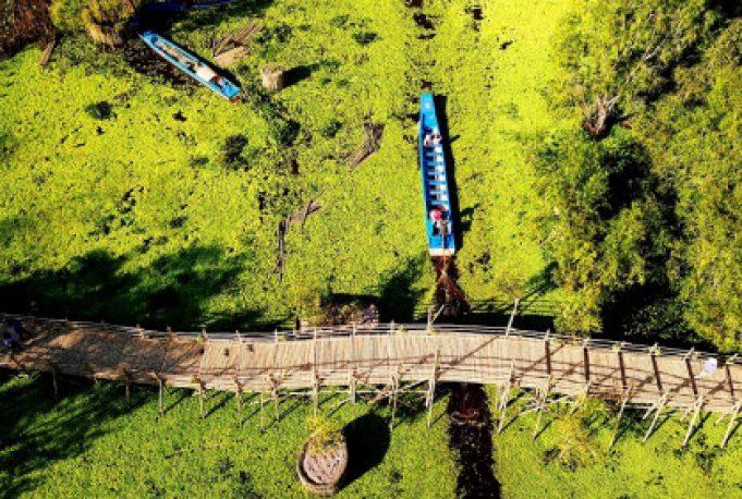 Cầu tre vạn bước ở rừng ràm Trà Sư
