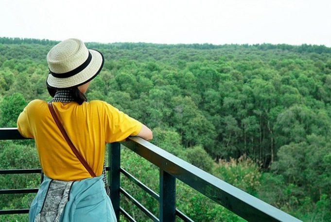 Trên tháp canh Tràm Trà Sư trong tour miền Tây Phú Quốc